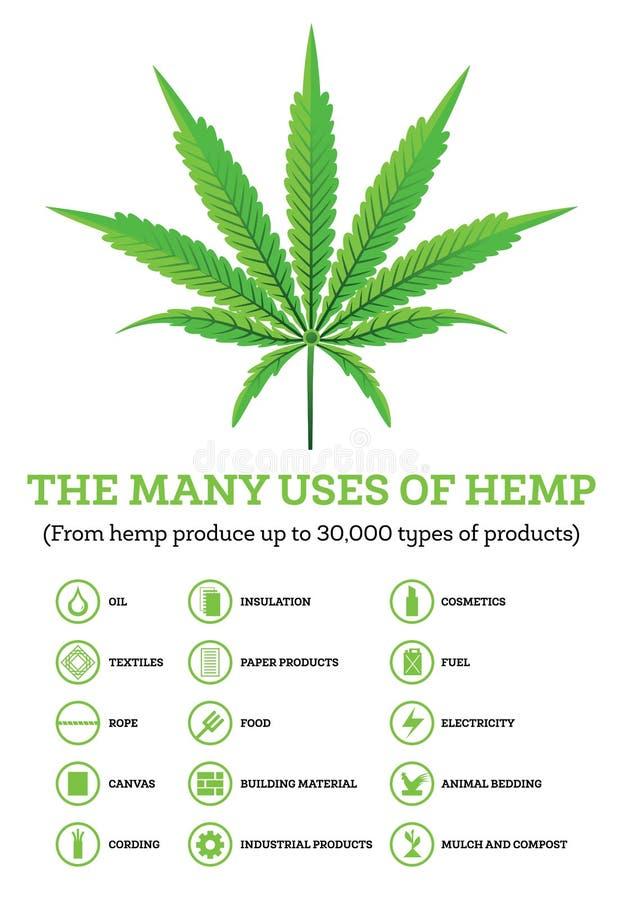 与产品象的工业用大麻Infographic  皇族释放例证