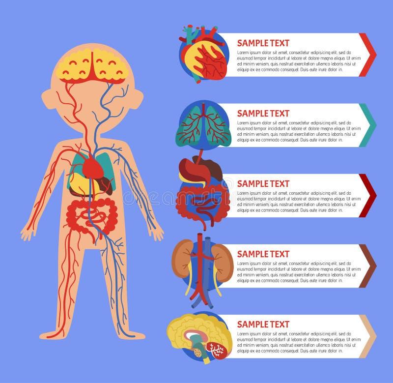 与人体解剖学的健康海报 向量例证