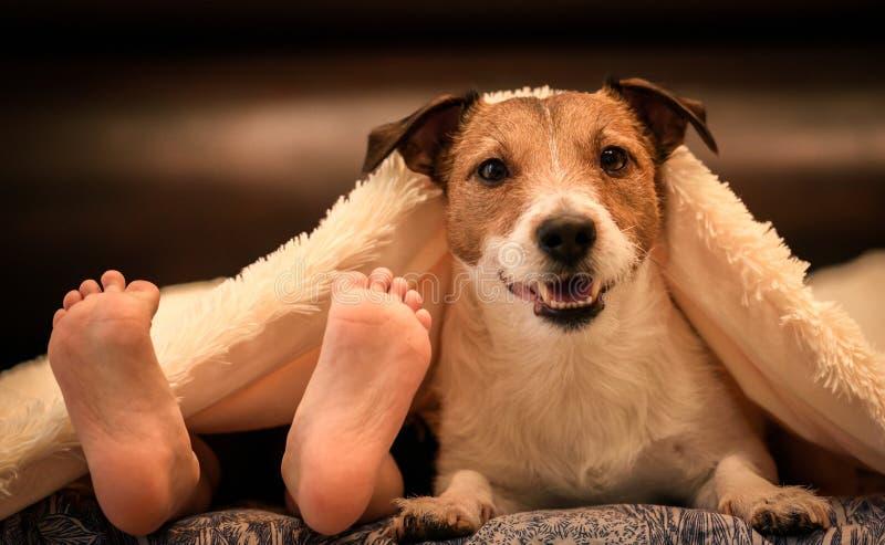 与人的孩子的舒适和幽默场面结算和可爱的狗在床上的鸭绒垫子下 免版税库存图片