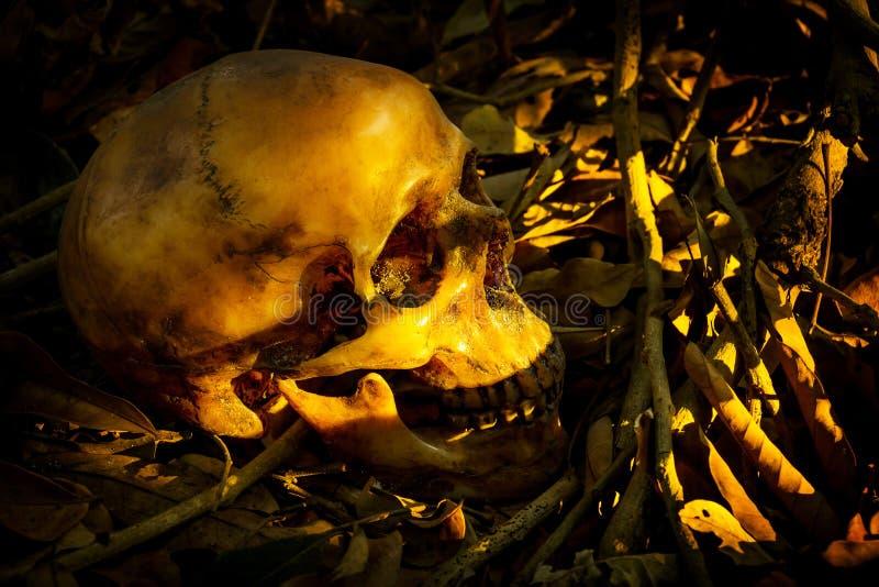 与人的头骨的静物画在堆叶子 免版税库存照片
