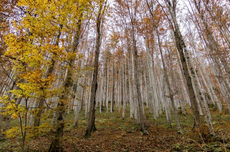 与从轰鸣声看见的银色森林的宽风景 库存图片