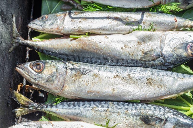 与他的头的未加工的鲭鱼整体在格栅 烹调的抽烟的热鱼 库存照片