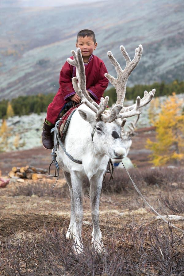与他的家庭` s驯鹿的小的tsaatan男孩骑马 免版税图库摄影