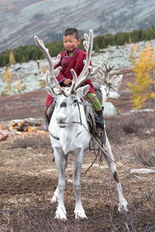 与他的家庭` s驯鹿的小的tsaatan男孩骑马 库存图片