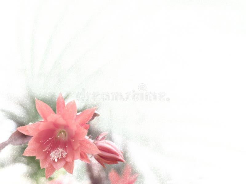 与仙人掌开花的花卉背景设计 库存例证
