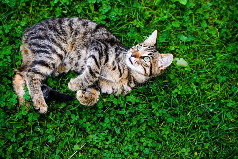 与令人惊讶的眼睛的猫在绿草 库存照片