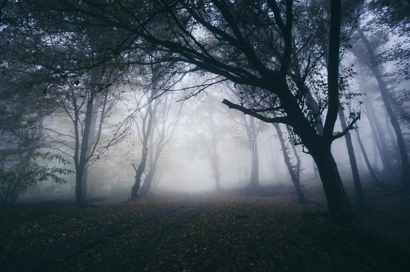 与令人毛骨悚然的树的被困扰的万圣节森林背景 图库摄影