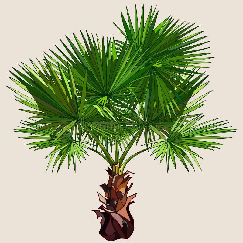 与传播的叶子的小棕榈树图片