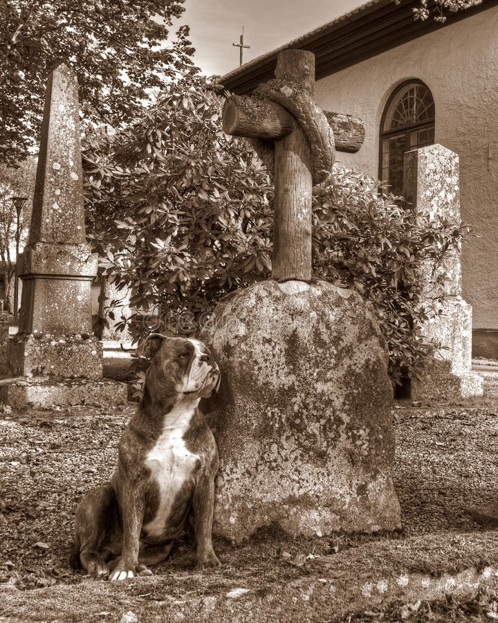与伤心卫兵的一条狗在hdr和减速火箭的样式的坟墓图片
