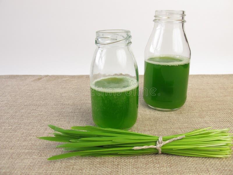与似燕麦的草的绿色圆滑的人 免版税图库摄影