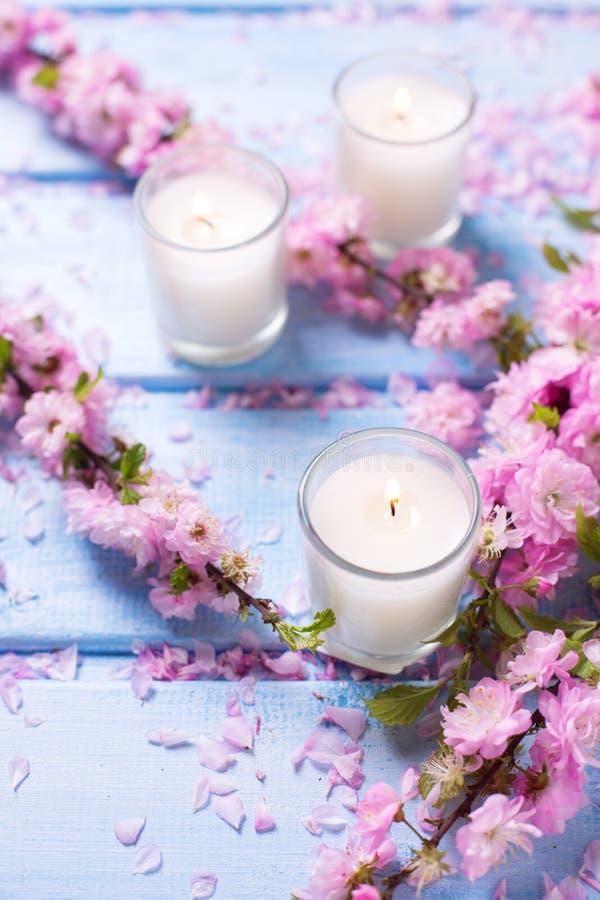 与佐仓桃红色的背景开花和在蓝色woode的蜡烛 图库摄影