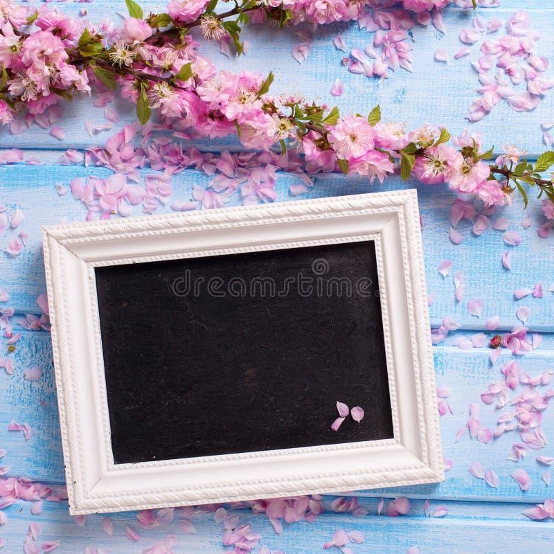 与佐仓桃红色的背景开花和在b的空的黑板 库存照片