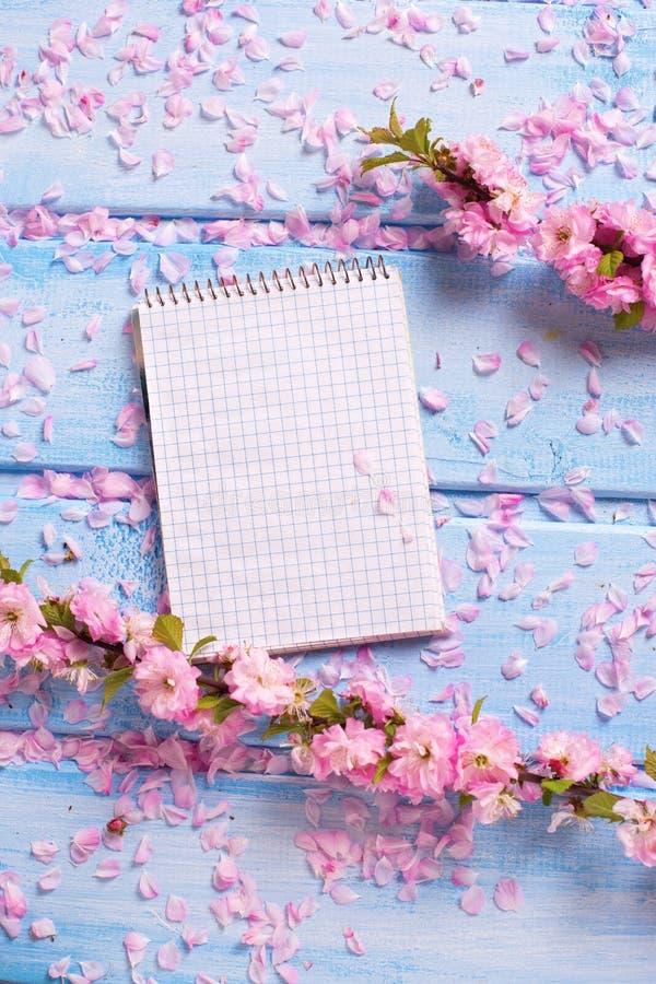 与佐仓桃红色的背景开花,并且在蓝色的空标识符求爱 库存图片