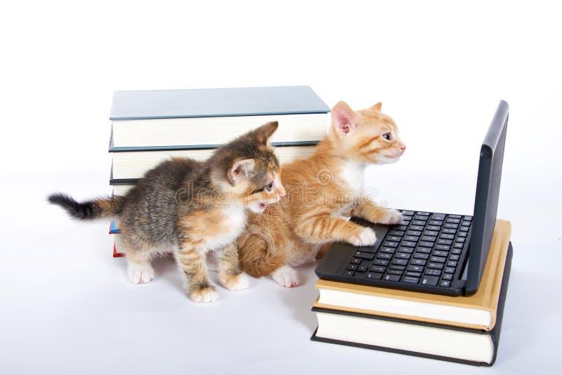 与便携式计算机和书的两只小猫 免版税库存图片