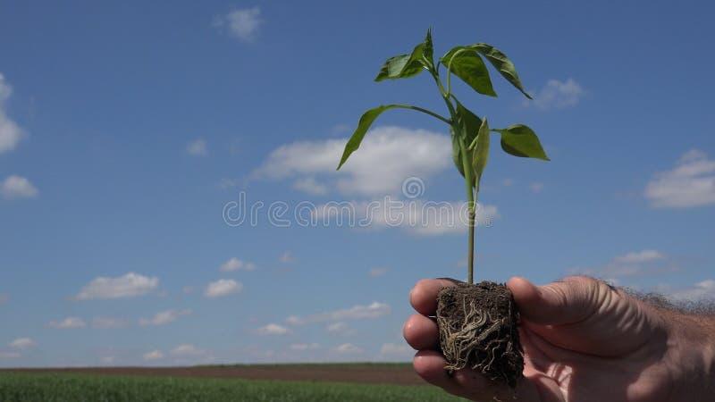 与保留在手一棵小植物的农夫的外部图象 免版税库存照片