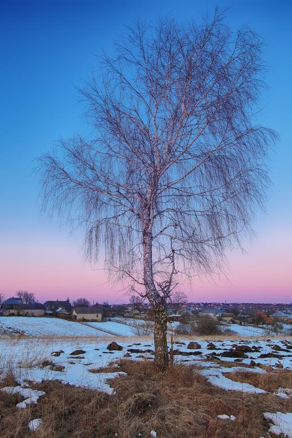 与偏僻的桦树的美好的冬天领域风景 免版税库存照片