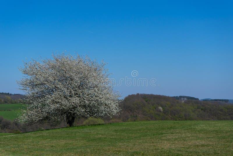与偏僻的苹果树的风景在德国Rothaargebirge 免版税库存照片