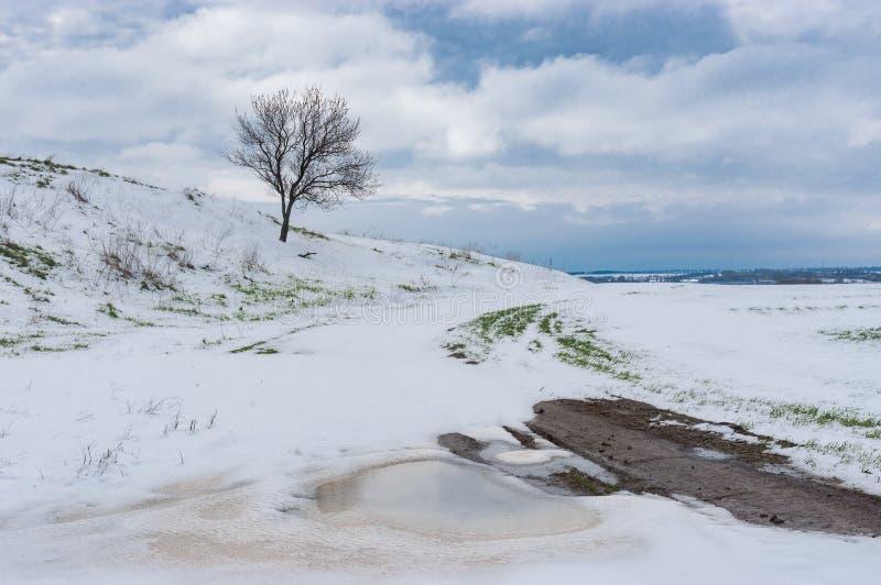 与偏僻的开花的杏树的春天风景在雪风暴以后的小山在4月 库存照片