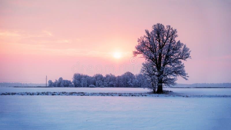 与偏僻的树和五颜六色的天空的抽象冬天日出风景 免版税库存照片