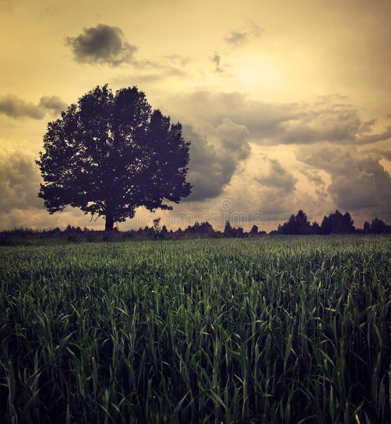 与偏僻的树和喜怒无常的天空的黑暗的风景 免版税库存照片