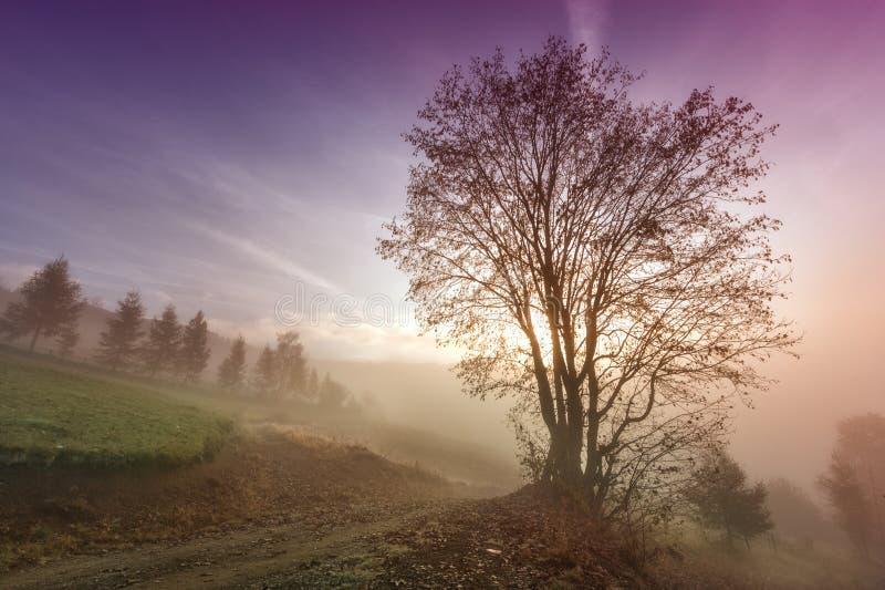 与偏僻的树的有薄雾的早晨场面 免版税库存图片
