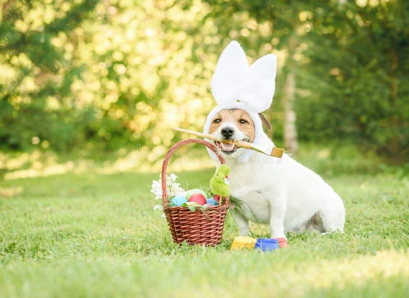 与做与传统复活节标志的礼物篮子的兔宝宝耳朵的可笑的狗 免版税库存图片