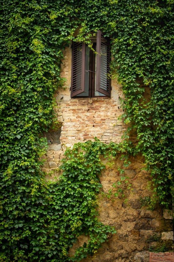 与充分墙壁的老窗口藤 T 免版税库存图片