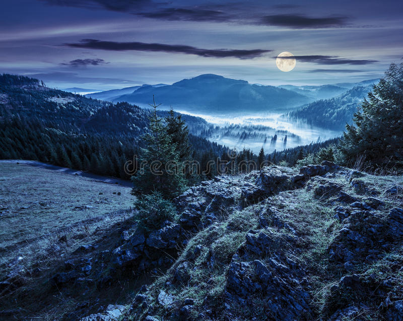 与充分针叶树森林的谷在山的雾在晚上 库存照片