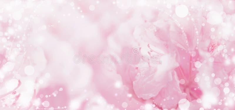 与光和bokeh的美好的桃红色淡色花卉浪漫背景 免版税图库摄影