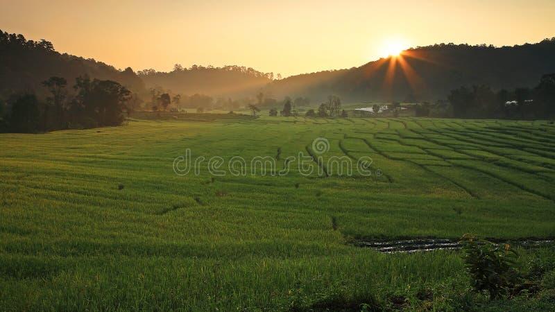 与光束的露台的米领域在日出 库存图片