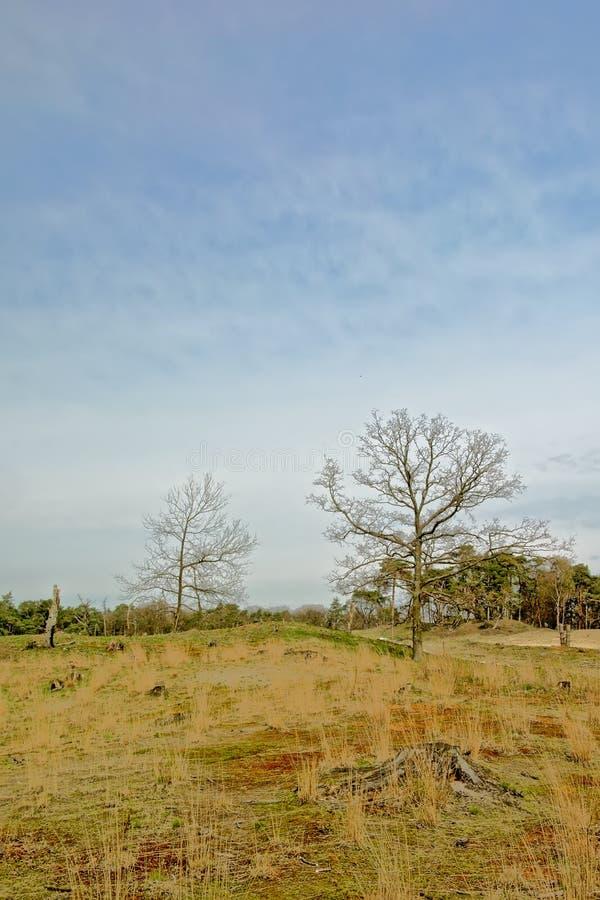 与光秃和云杉的树的荒地风景 库存照片