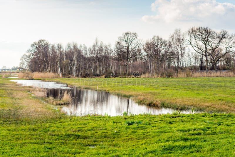 自然池塘在一个无风夏日.图片