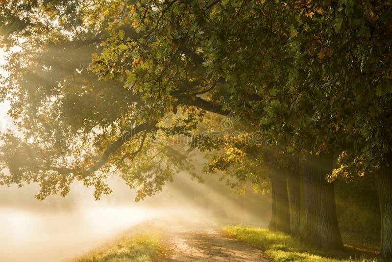 与光芒的日出在一条有雾的神奇道路的背景我 库存照片
