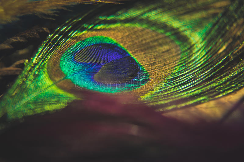 与光bokeh的五颜六色的羽毛孔雀 在和平您文本的白色的概念标志 免版税图库摄影