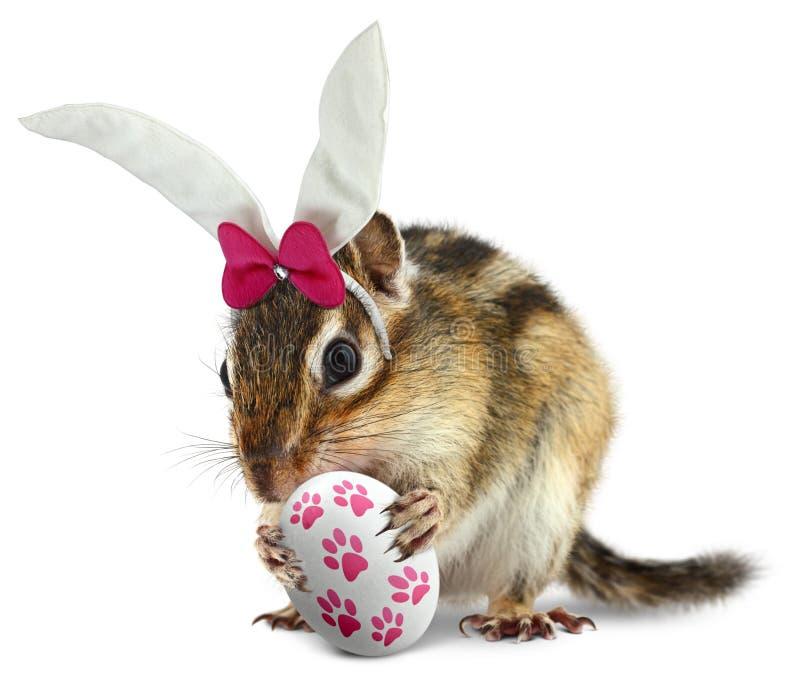 与兔宝宝耳朵和复活节彩蛋的滑稽的花栗鼠 库存图片