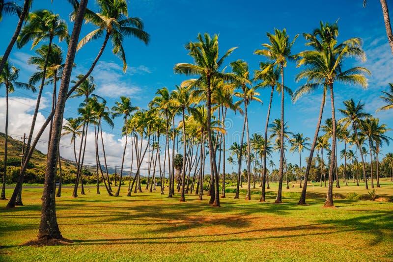 与入口门的美丽的棕榈树 库存照片