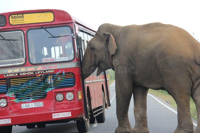 与公共汽车的大象 库存照片