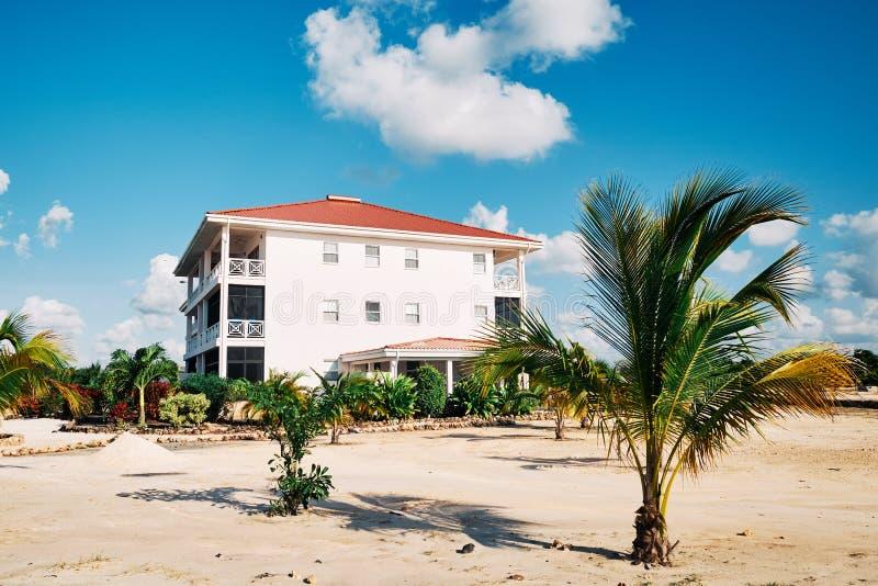 与公寓房的棕榈树 库存照片
