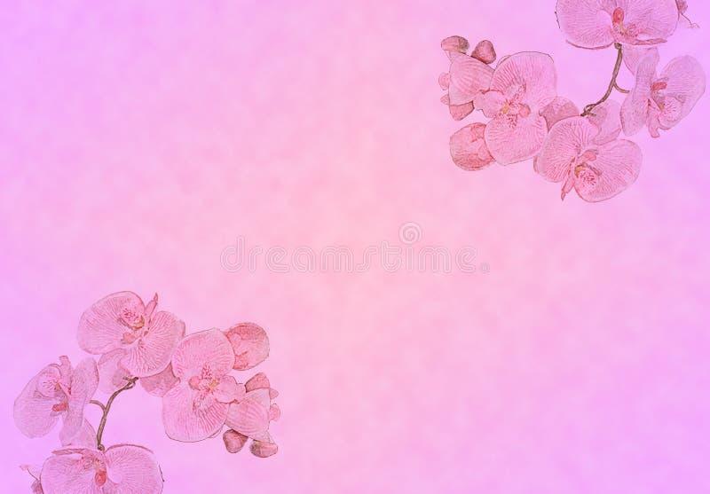 与兰花的可爱的桃红色背景 免版税图库摄影
