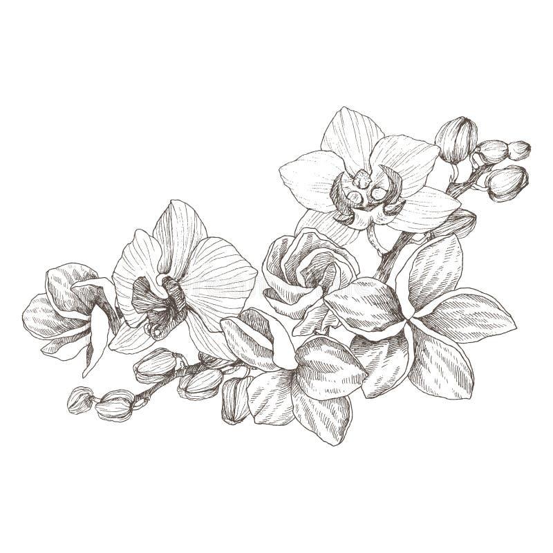 与兰花的手拉的黑概述在被隔绝的白色背景的花束和羽毛 高度详细的传染媒介 向量例证