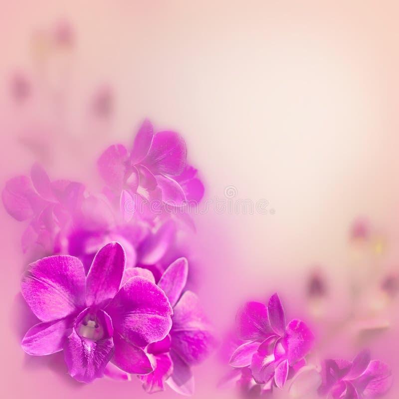 与兰花的抽象浪漫花卉背景 库存图片