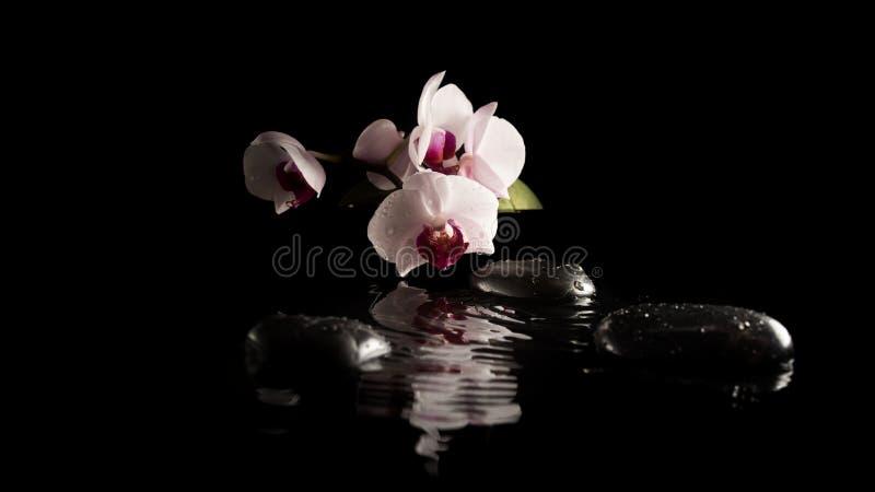 与兰花的温泉背景在按摩石头 库存图片