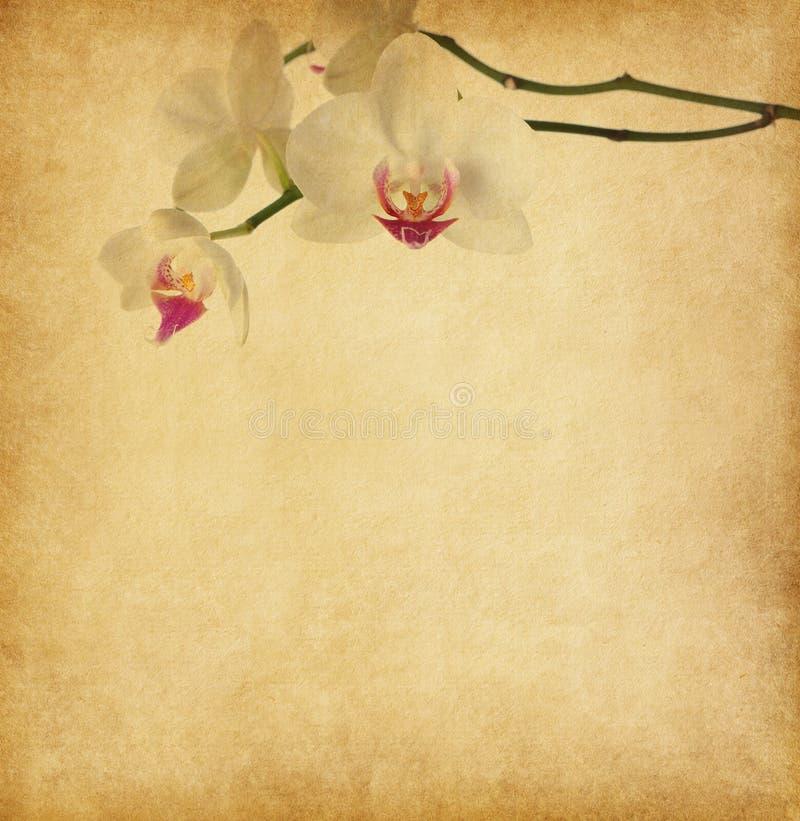 与兰花的老纸。 免版税图库摄影