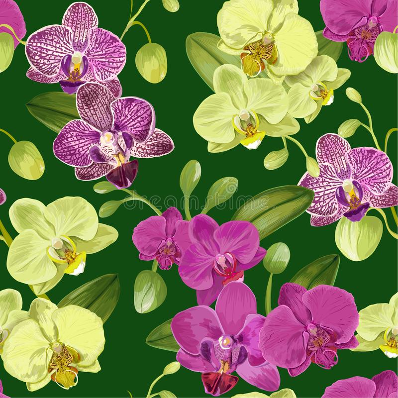 与兰花花的无缝的热带样式 织品纺织品的,墙纸花卉背景,包裹 水彩 向量例证