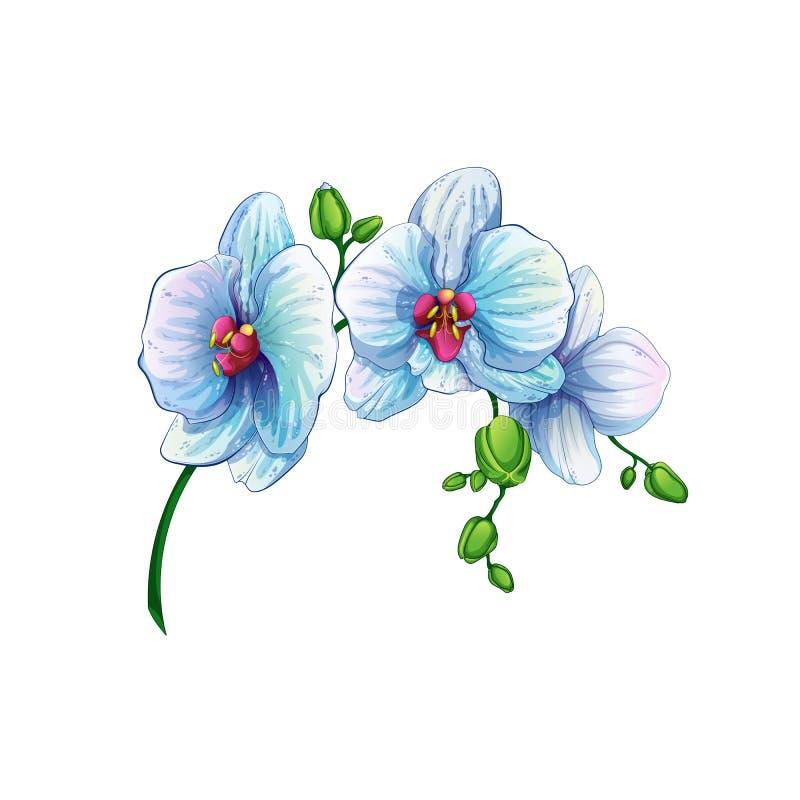 与兰花花的美好的分支在白色背景 从夏威夷群岛的热带植物 库存例证