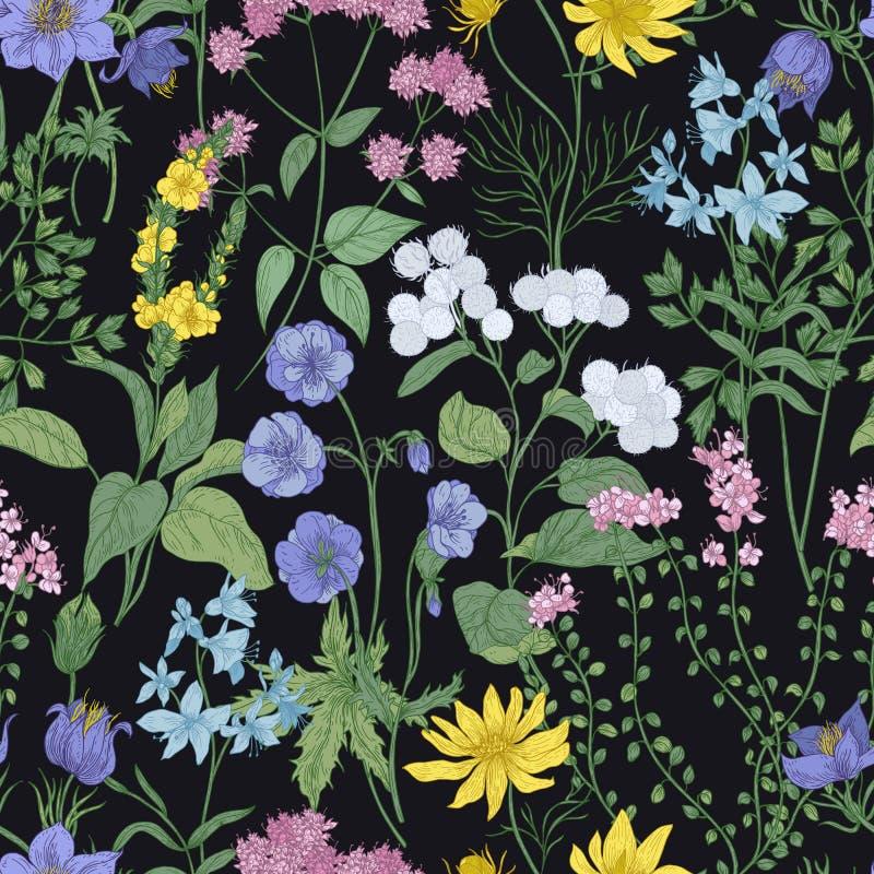 与典雅的开花的花、开花和草本的植物的无缝的样式在黑背景 花卉背景 库存例证