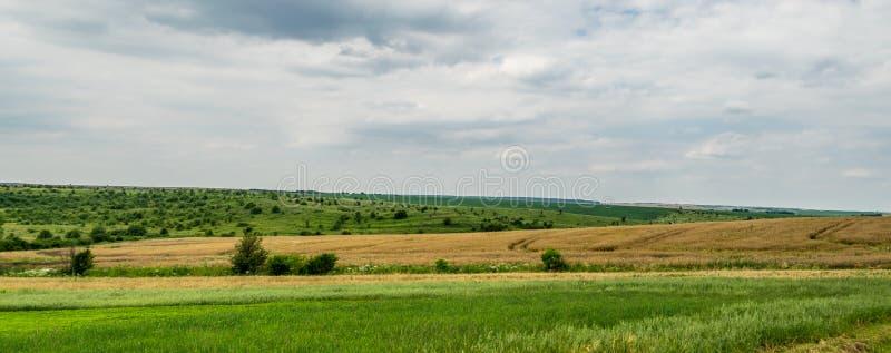 与农业设备踪影的麦田  免版税库存照片