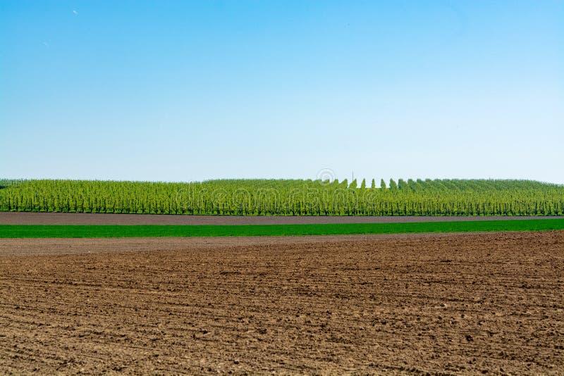 与农夫的春天风景犁了领域、绿草、果树果树园和天空蔚蓝 免版税库存照片