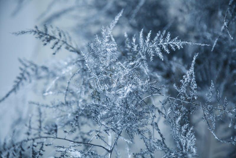 与冰晶的冻结的分支在黑背景 Hoarfros 免版税库存图片