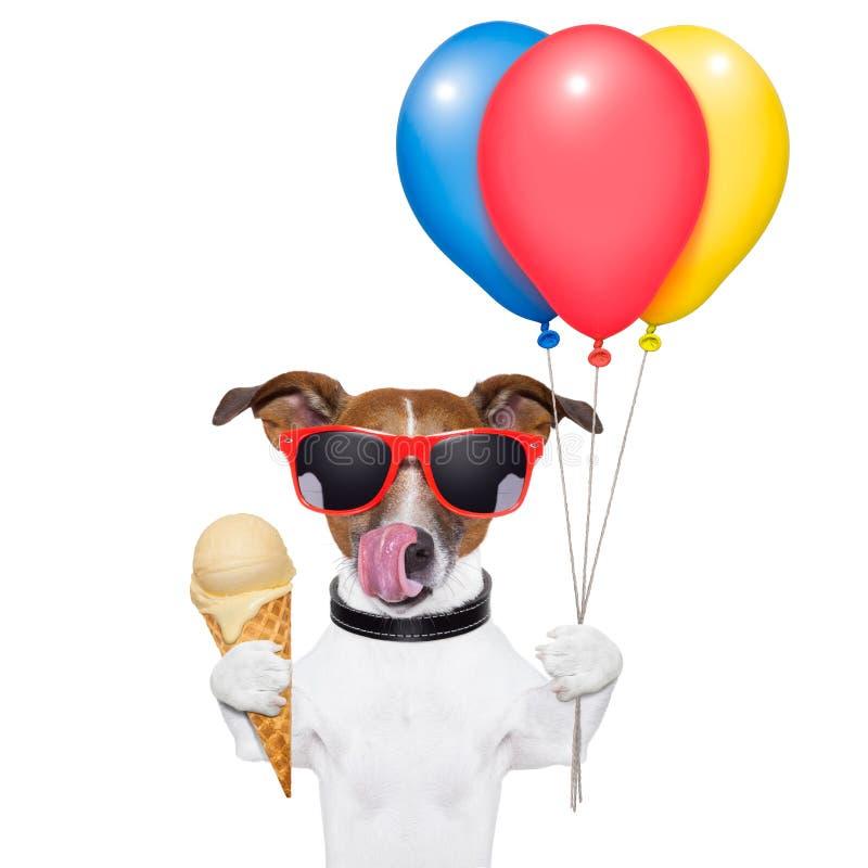 与冰淇凌的狗 免版税库存照片